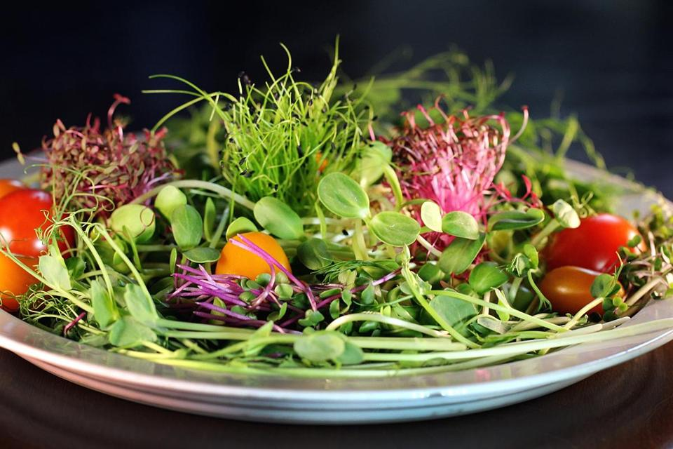 A salad made from their crops includes red garnet amaranth, pea shoots, chives, sunflower shoots, Hong vit radishes, and kale.